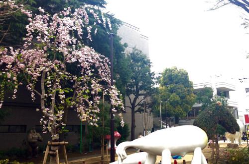 練馬区立美術館、アートと桜